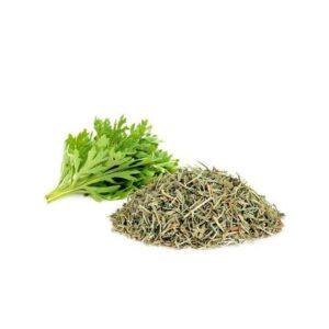 Slatki Pelin (Artemisia annua)
